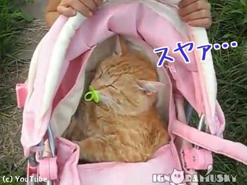 おままごとに付き合う猫00