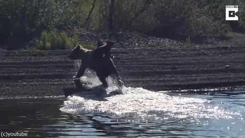 熊ママの泳ぎが想像以上にすごい04
