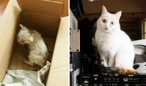 救助された猫02