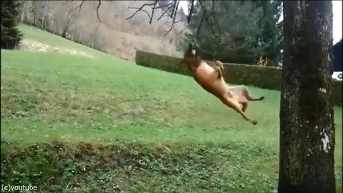 犬のダイナミックなひとり遊び05