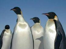 2.ペンギン(Penguin)