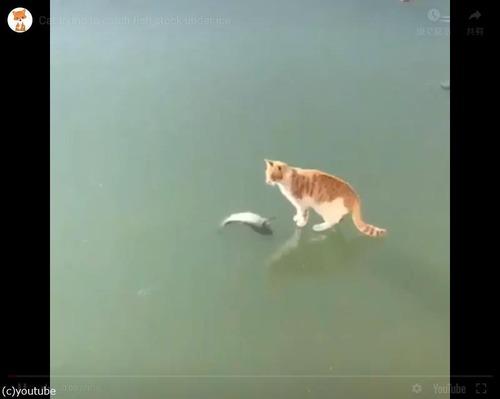 魚とれない猫01
