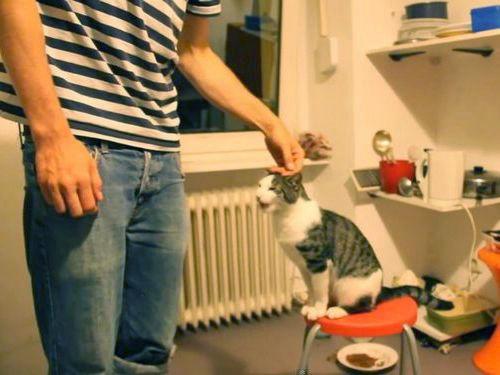 ハイタッチが得意な猫01