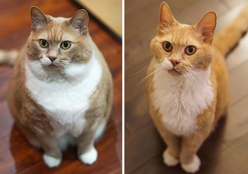 ダイエットに成功した猫たち07