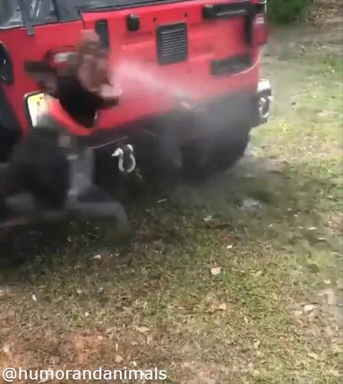 洗車を邪魔する無邪気なワンコ04