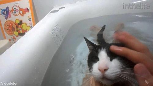 お風呂が大好きな猫05