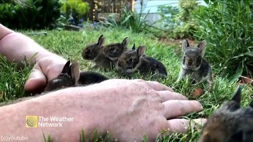 ウサギの赤ちゃんがめちゃくちゃ懐いてきた03