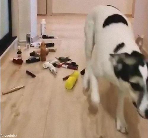 猫と犬の障害物回避07