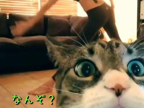 ヨガ撮影中に猫が00