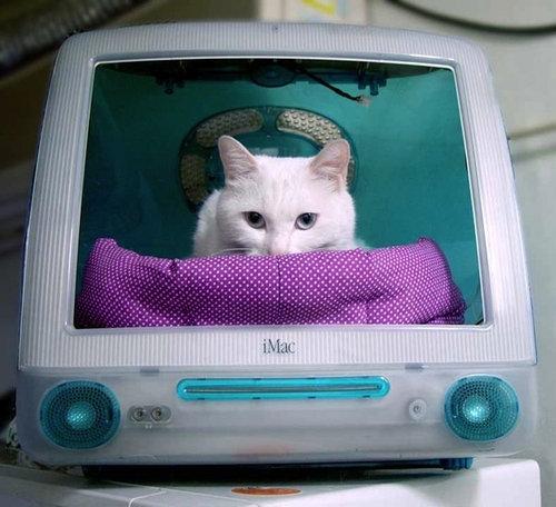 iMacと猫08