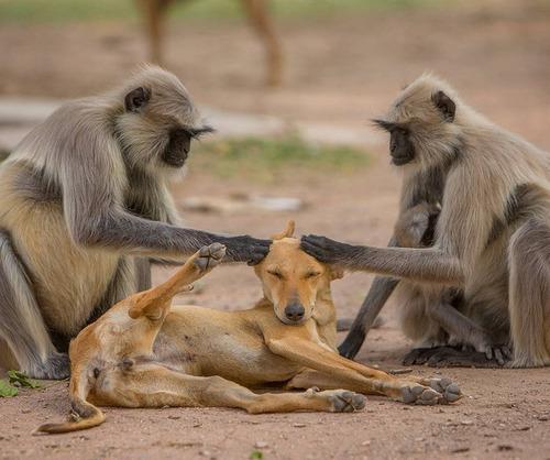 犬を慈しむ猿01