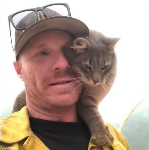 山火事から救出された猫04