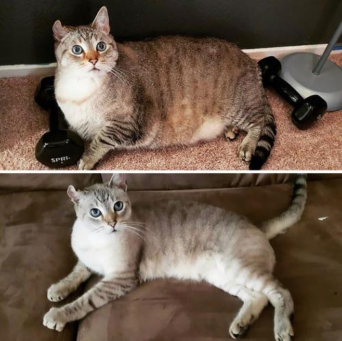 ダイエットに成功した猫たち05