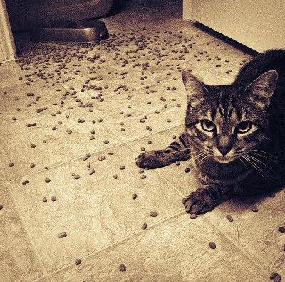 ネコのエサをアップグレード01