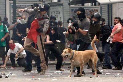 ギリシャの暴動犬17