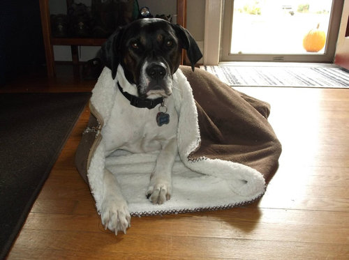 犬と一緒にバックパッカー05