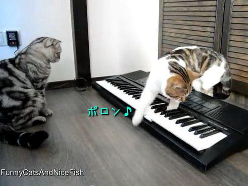 猫から学ぶ、彼氏としてのふるまい04