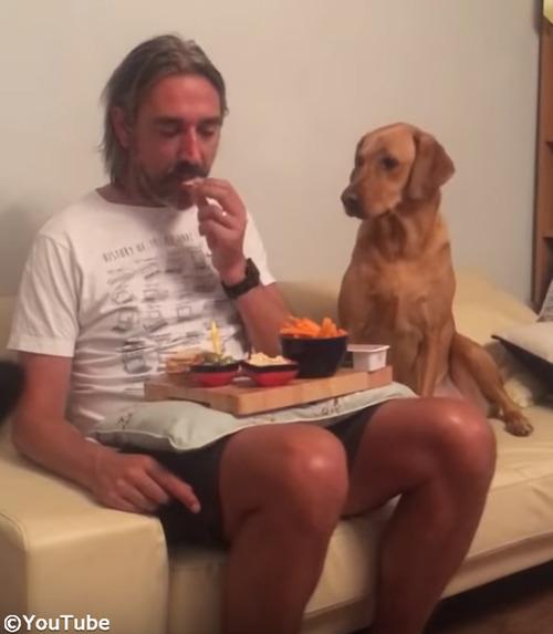 犬「べ、べつに興味ないし!」03