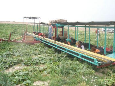 半自動きゅうり収穫機02