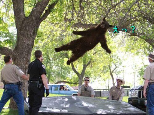 クマが落ちた00