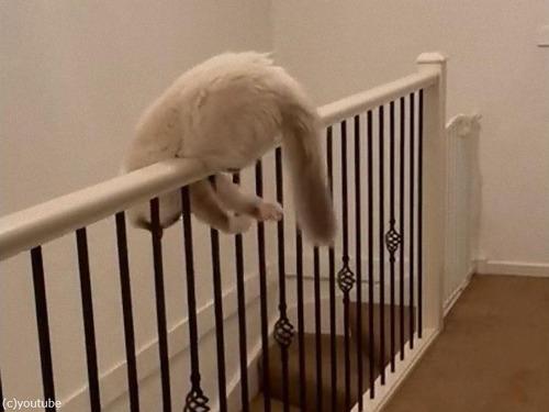 階段の手すりでしっぽ遊びを始める猫00