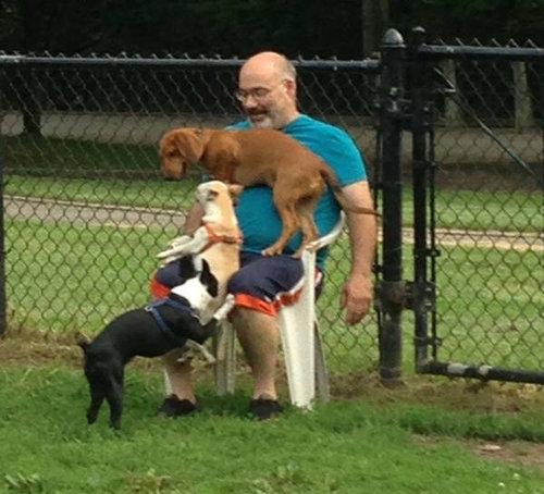 犬を飼うべき理由27