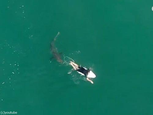ドローンの警告でサメを回避したサーファー00