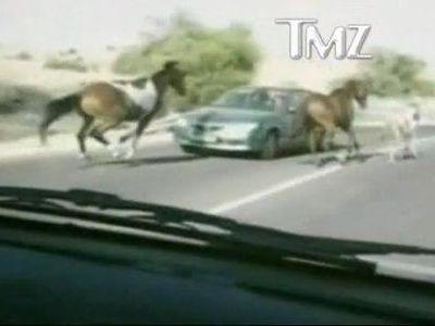 道路を馬が気持ちよく疾走