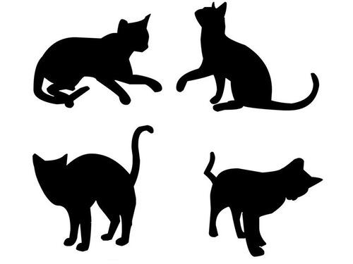 「猫とは思えないヨガをしているようなポーズ…」