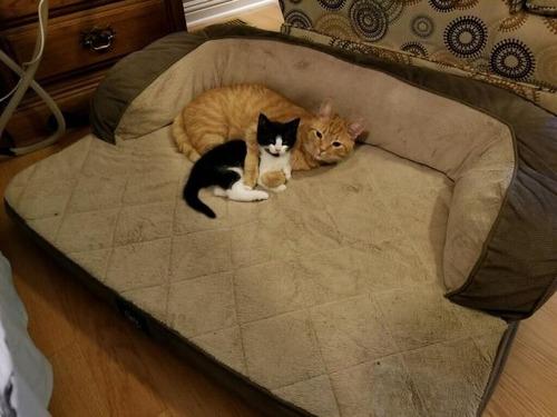 猫にベッドを奪われた犬たち03