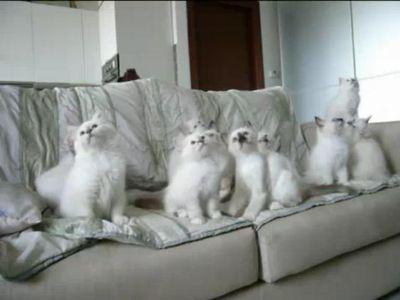 首をフリフリ猫軍団