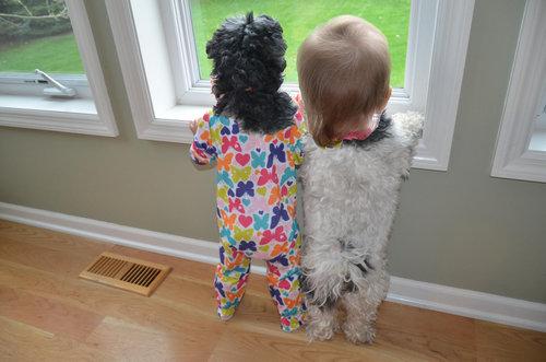 犬と赤ちゃん02