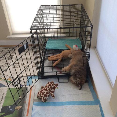 子犬たちが初めて家に来た日17