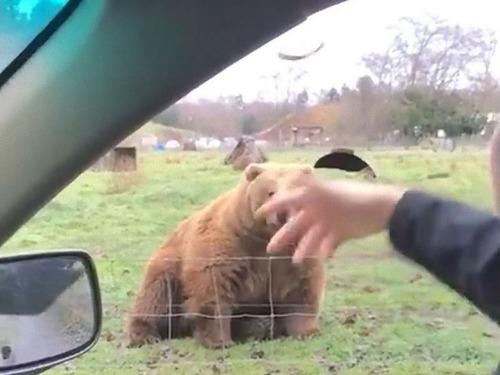 クマに食パンをフリスビーのように投げた02