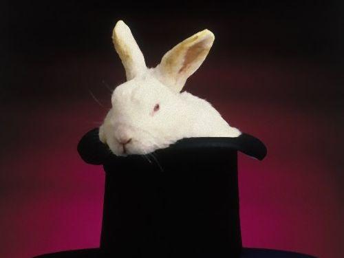 オーストラリアでウサギは禁止00
