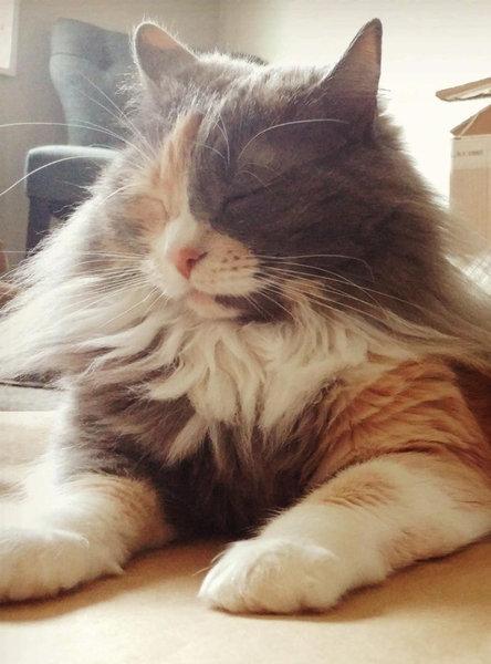 みすぼらしい猫がふさふさに06