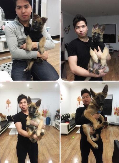犬の成長15