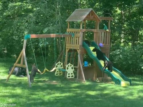 庭の遊具でクマの親子たちが楽しそうに遊んでた01