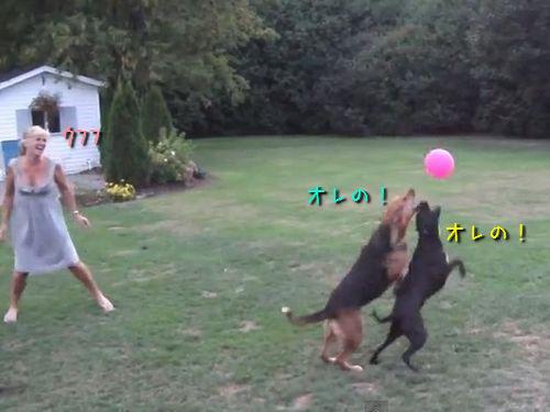 風船と犬2匹