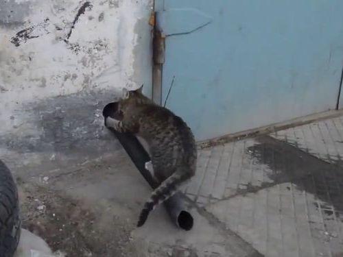 猫の家宅侵入の手口01