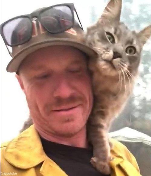山火事から救出された猫03