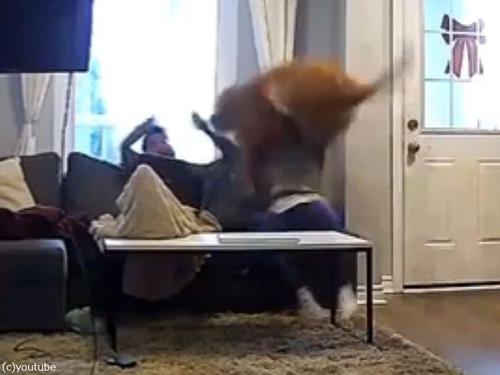 子犬の気持ちの大型犬03