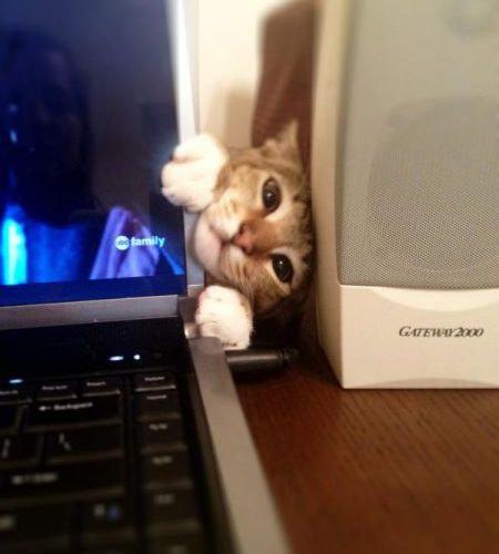 猫は見ている09