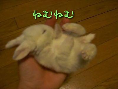 ねむねむウサギ