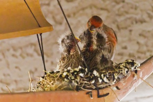 ウインドチャイムに鳥の巣04