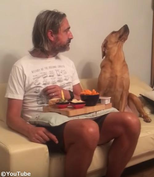 犬「べ、べつに興味ないし!」04