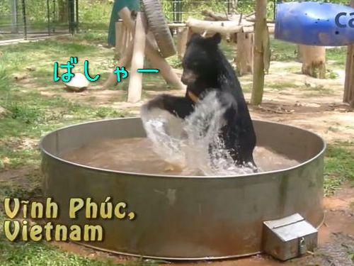 プールで荒ぶるクマ00
