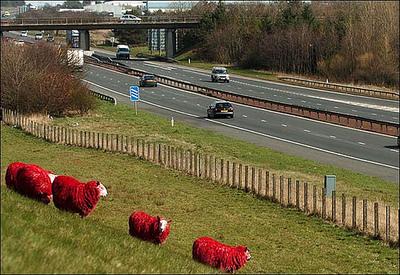 目の覚めるような真っ赤な羊の群れ01