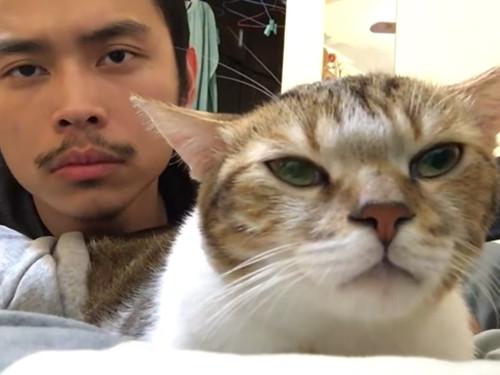 リズム感がありすぎる猫00
