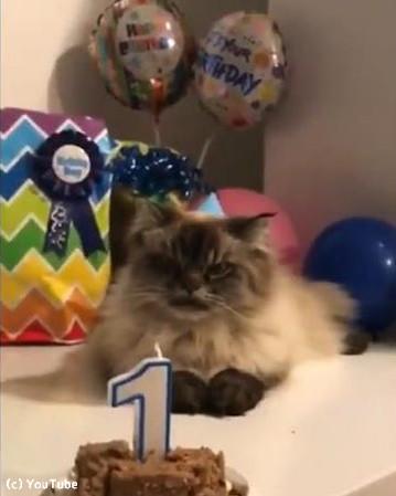今日は愛猫の誕生日パーティー01